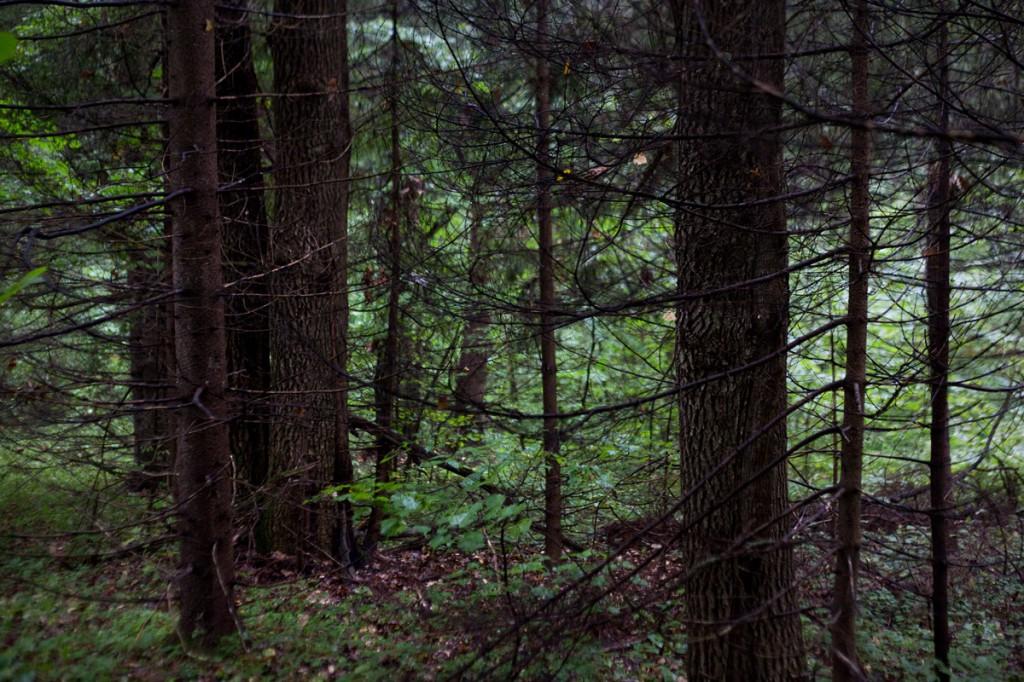 Подмосковный лес