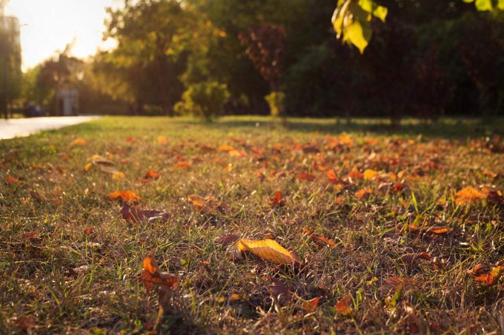 Начало осени, листья начинают покрывать землю ярким ковром