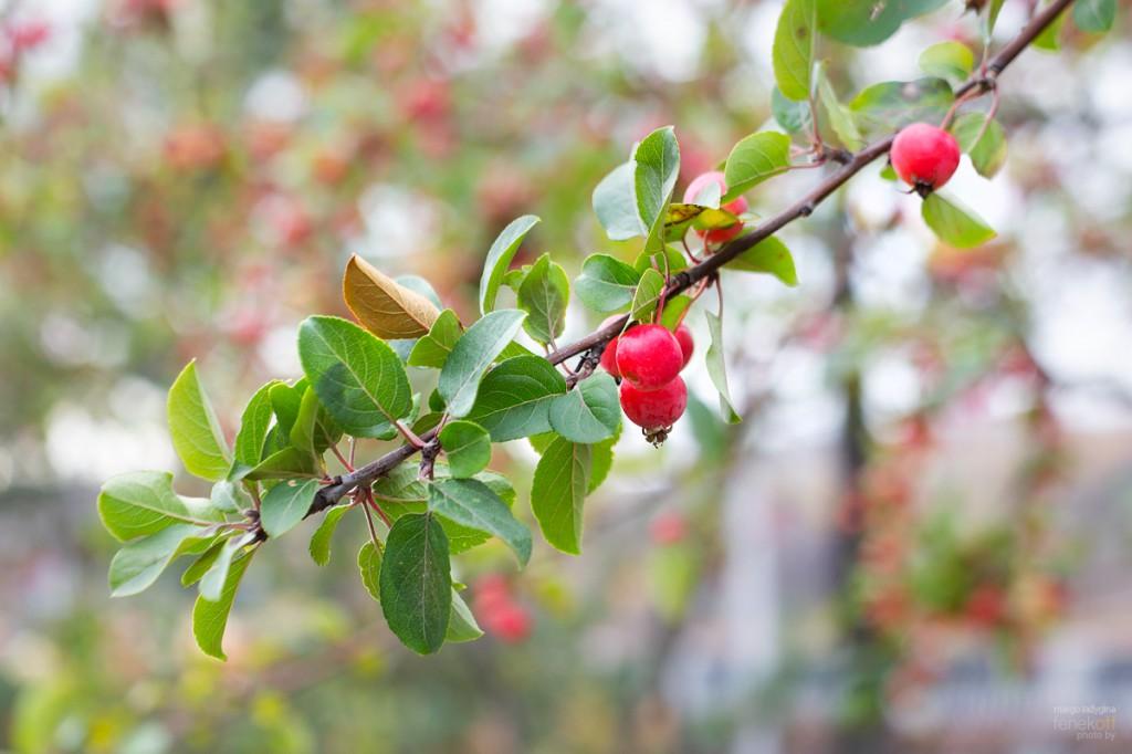 Декоративные мини-яблочки