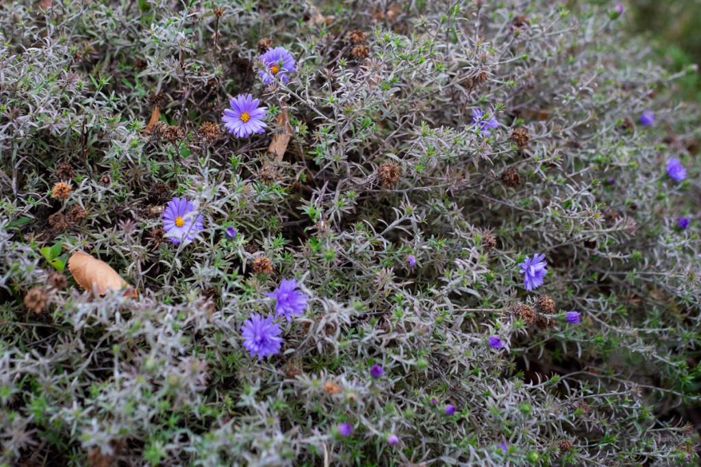 Цветы в Лужниках