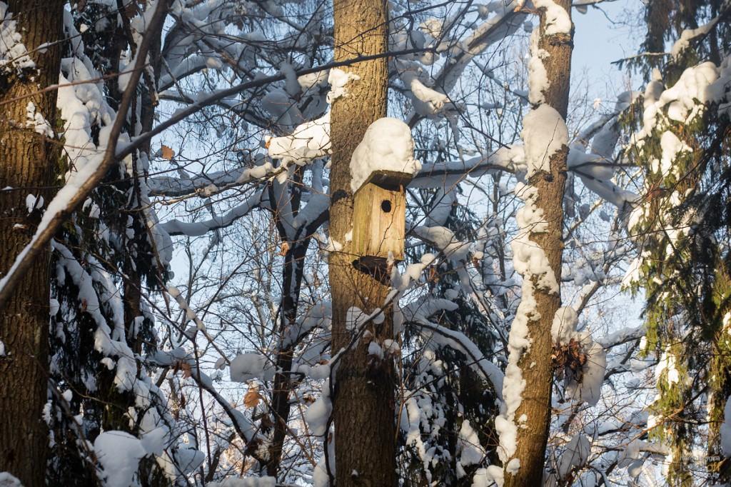 Скворечник в заснеженном лесу