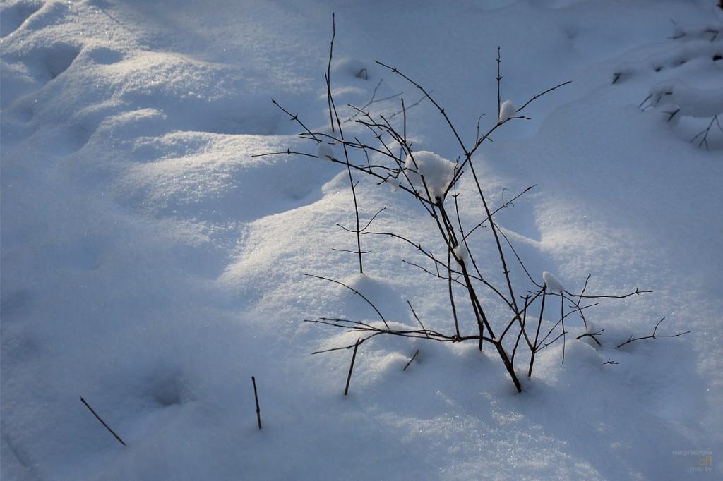 Солнечный след на снегу